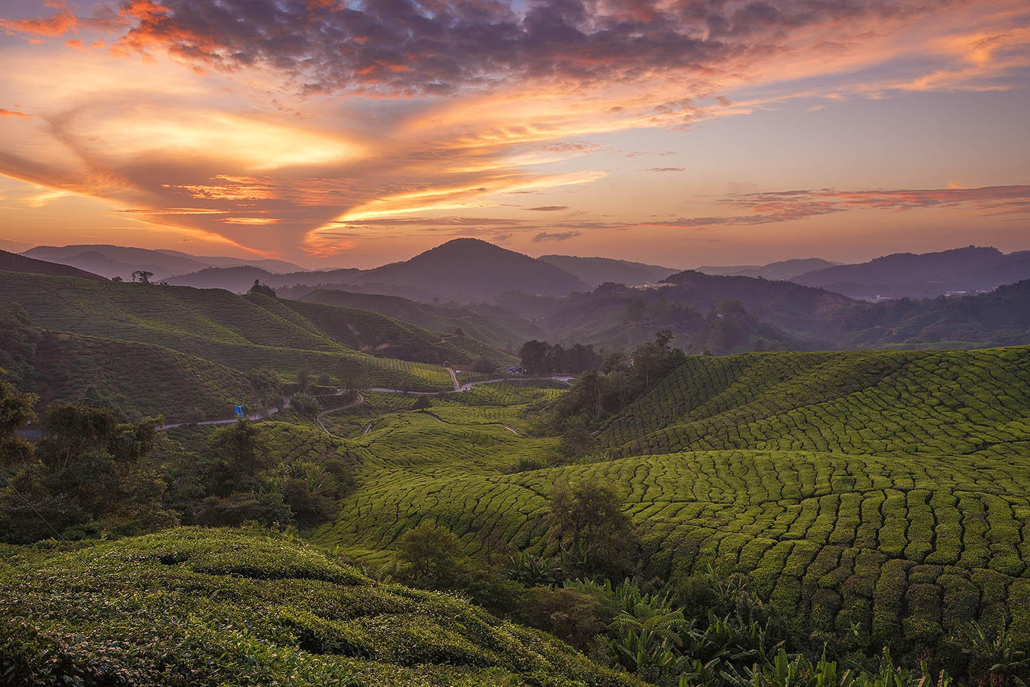 Cameron Highlands Donald Yip